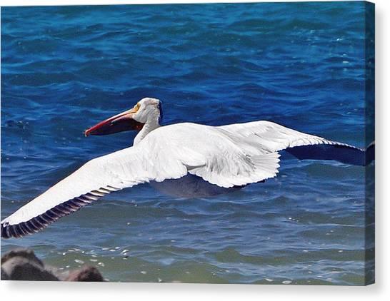 Pelican At Pyramid Lake Canvas Print