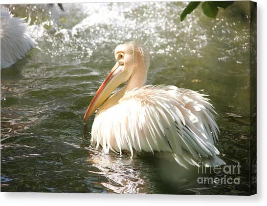 Pelican Bath Time Canvas Print