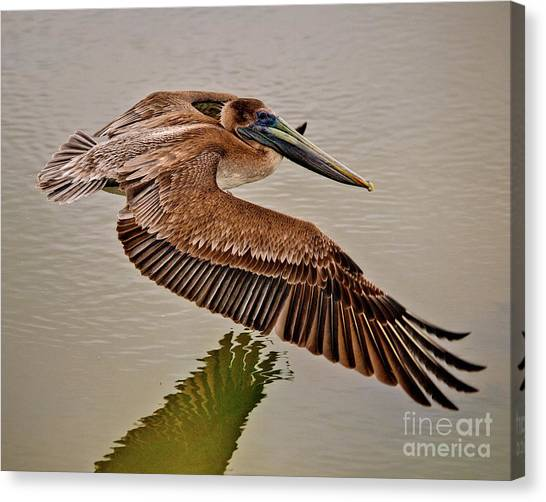 Pelican Cruise Canvas Print