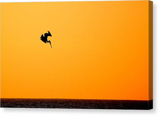 Pelican Diving At Sunset Canvas Print