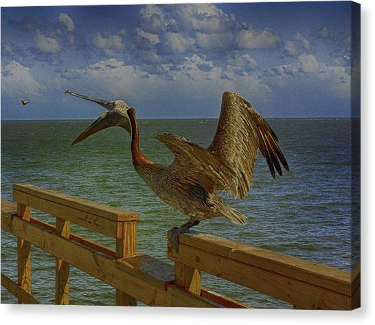 Pelican Eating Canvas Print
