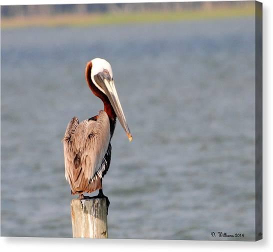 Pelican Eyes The Photographer Canvas Print