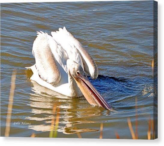 Pelican Fishing Canvas Print