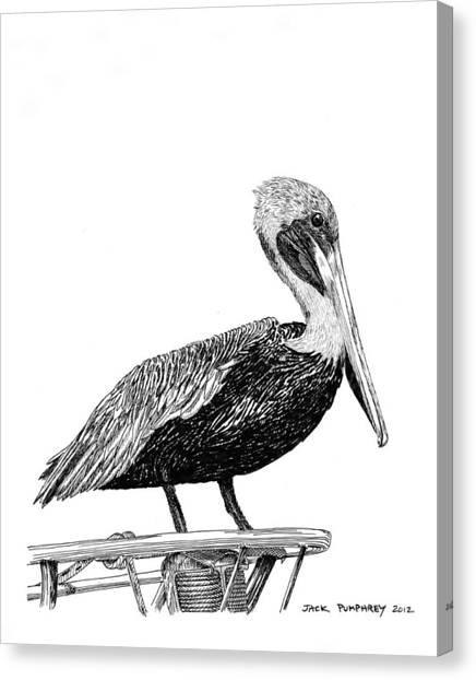 Monterey Pelican Canvas Print