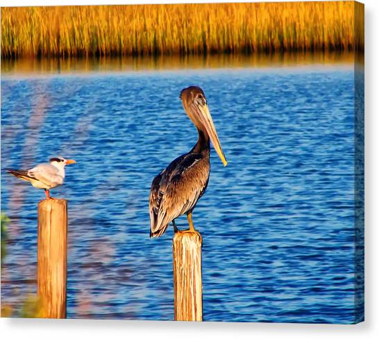 Pelican On A Pole Canvas Print