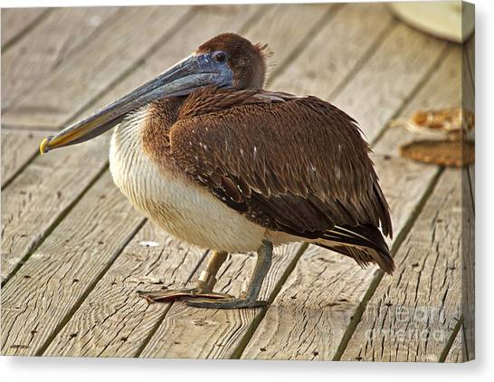 Pelican On The Dock II Canvas Print