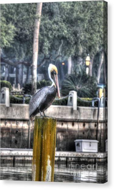 Pelican On Water Post Canvas Print by Dan Friend