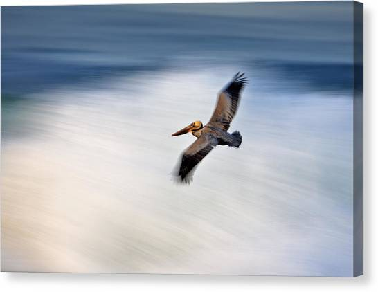 Pelican Over Wave  Mg_1212 Canvas Print