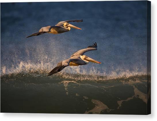 Pelican Pair  73a2315 Canvas Print