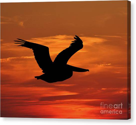 Pelican Profile Canvas Print