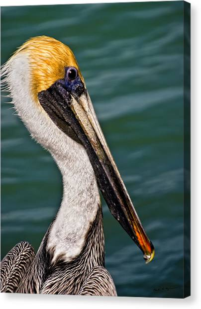 Pelican Profile No.40 Canvas Print