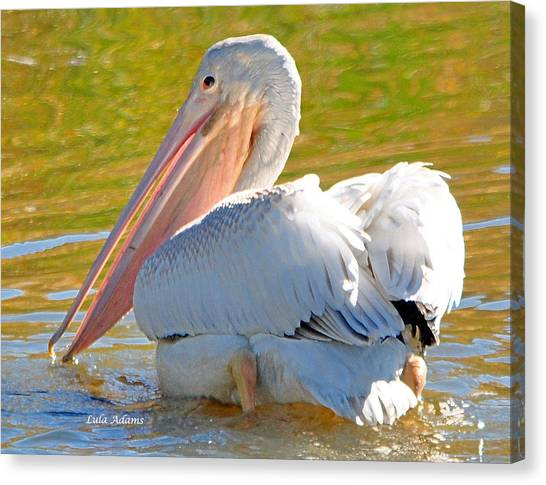 Pelican Sees Me Canvas Print