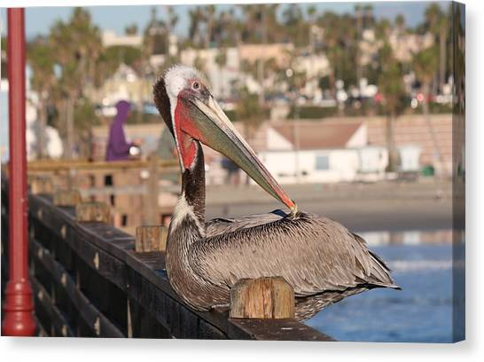 Pelican Sitting On Pier  Canvas Print
