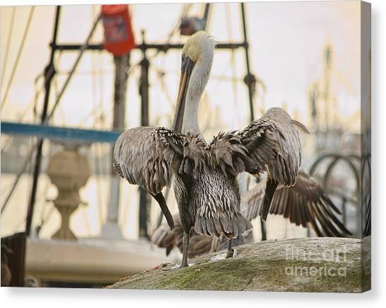 Pelican Strut Canvas Print