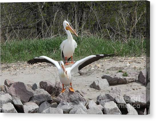 Canvas Print - Pelican Taking Off by Lori Tordsen