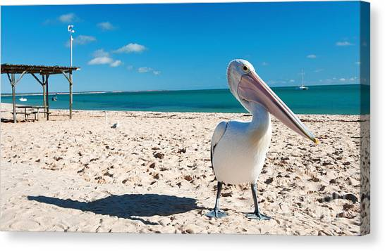 Canvas Print featuring the photograph Pelican Under Blue Sky by Yew Kwang