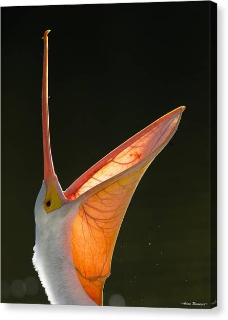 Pelican Yawn 2 Canvas Print