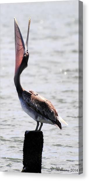 Pelican Yawn Canvas Print