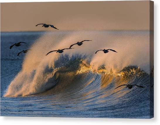 Pelicans And Wave 73a2308-2 Canvas Print