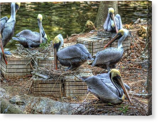 Pelicans By The Dock Canvas Print