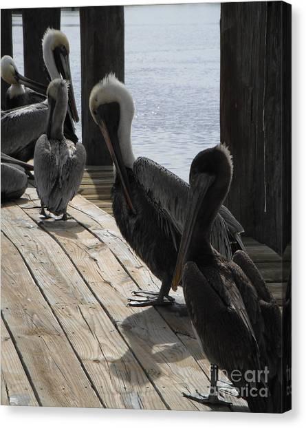 Pelicans Dockside Canvas Print
