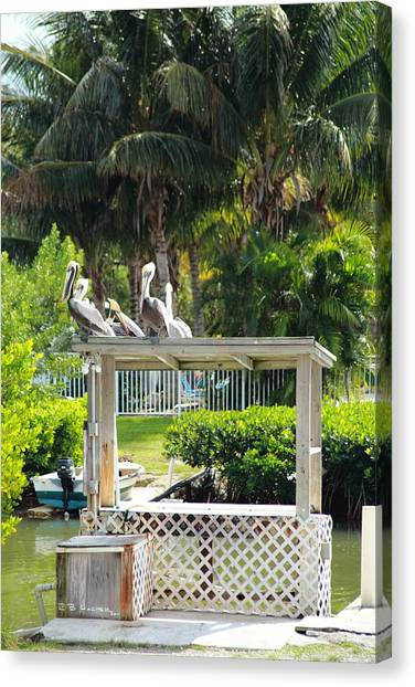 Canvas Print featuring the photograph Pelicans' Fish Prep Station by R B Harper