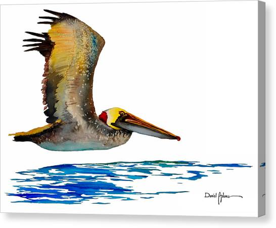 Da137 Pelican Over Water By Daniel Adams Canvas Print