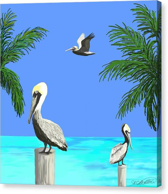 Pelicans In Meditation Canvas Print by Amy Scholten