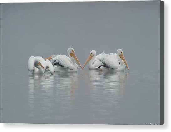 Pelicans In The Mist Canvas Print