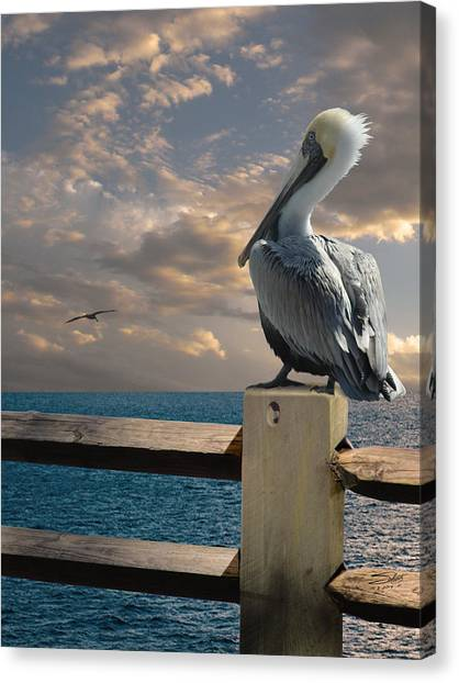Florida Wildlife Canvas Print - Pelicans Of Tampa Bay by IM Spadecaller
