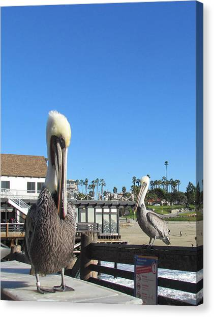Pelicans On Pier Canvas Print