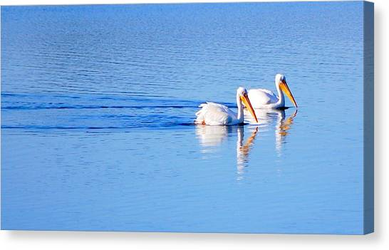 Pelicans On The Bay Canvas Print
