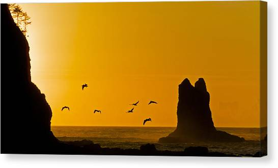Pelicans On The Wing II Canvas Print