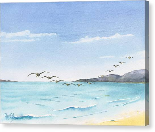 Ray Cole Canvas Print - Pelicans by Ray Cole