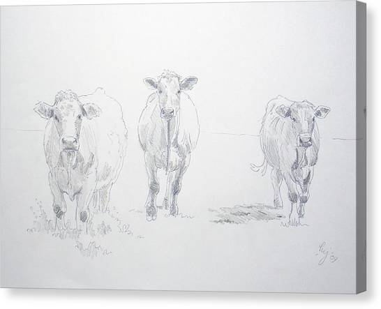 Pencil Drawing Of Three Cows Canvas Print
