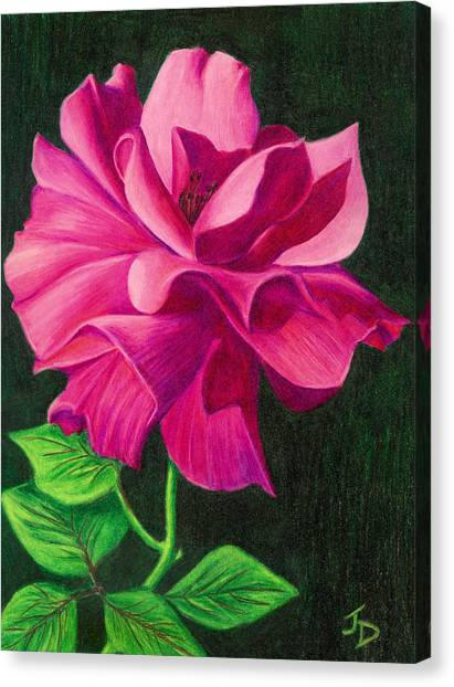 Pencil Rose Canvas Print