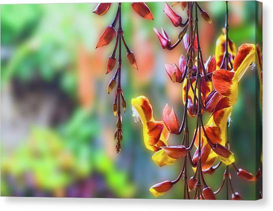 Pending Flowers Canvas Print