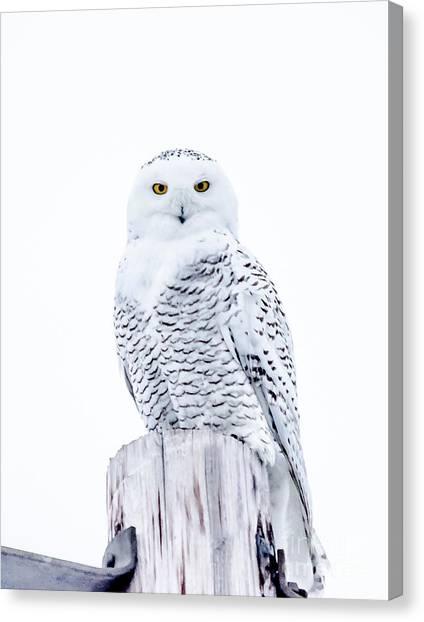 Penetrating Stare Canvas Print