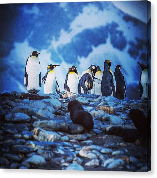 Antarctica Canvas Print - #penguin #antarctica #winter #cold by David Lamberti