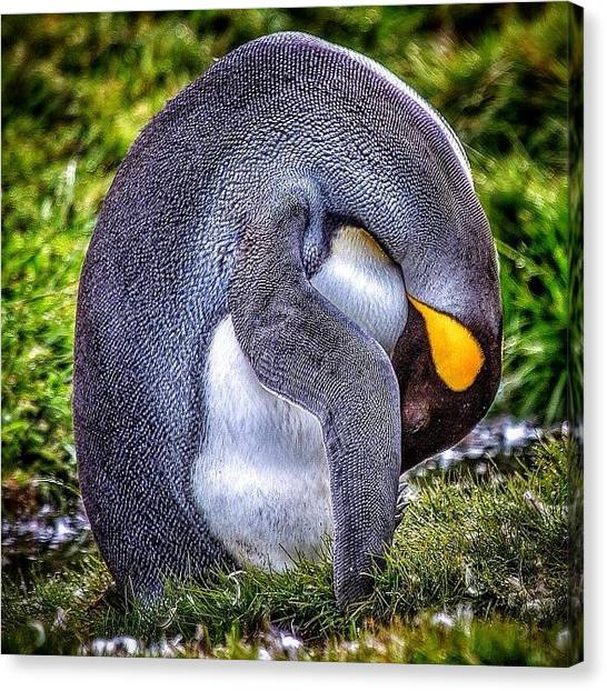 Antarctica Canvas Print - #penguin #bird #feathers #happyfeet by David Lamberti