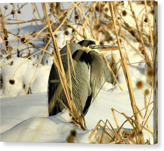 Penguin Heron  Canvas Print