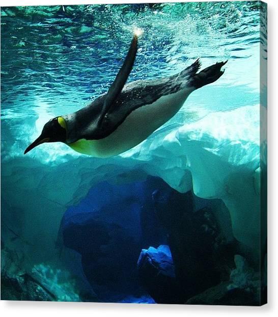 Antarctica Canvas Print - #penguin #kingpenguin #seaworld by Lana Houlihan