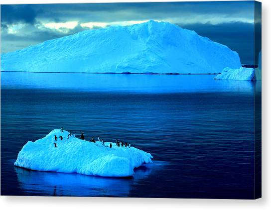 Penguins On Iceberg Canvas Print