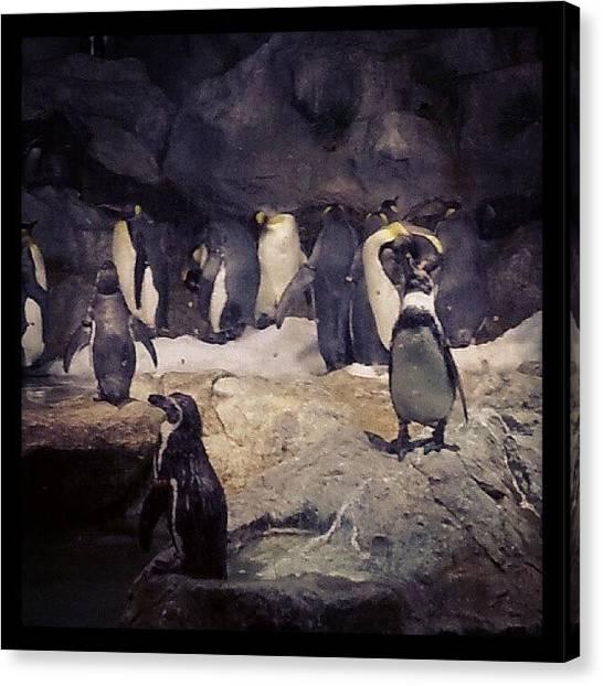 Penguins Canvas Print - Penguins! by Sharon Chia