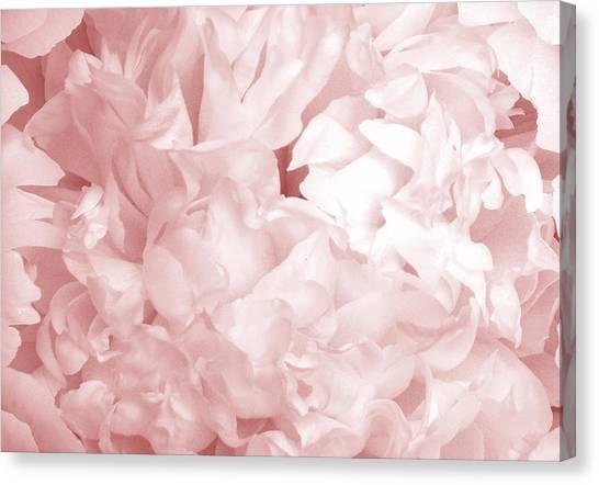 Peony Pink Beauty Canvas Print