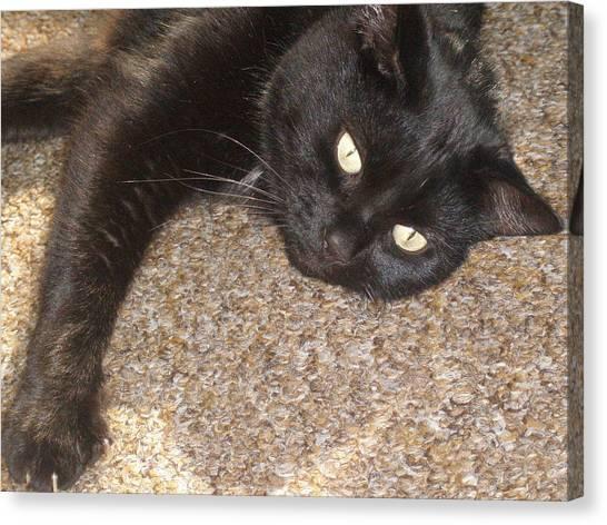 Pepsi Black Cat Found The Hot Spot Canvas Print