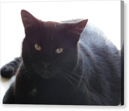 Pepsi The Lucky Black Cat Canvas Print
