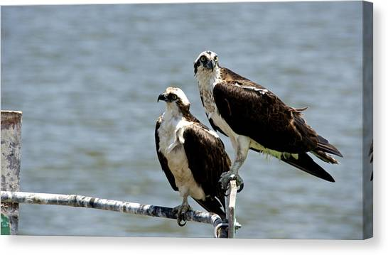 Perched On The River Canvas Print by Kathi Isserman