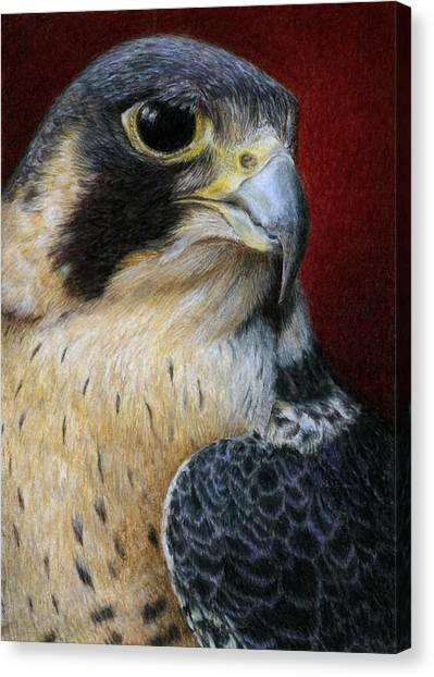 Falcons Canvas Print - Peregrine Falcon by Pat Erickson