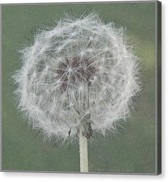 Perfect Dandelion Canvas Print